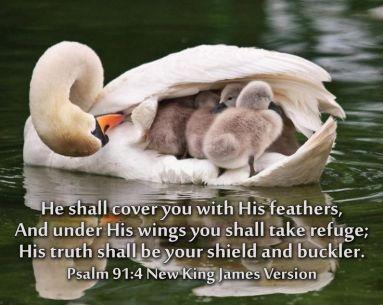 PSALMS 91.4